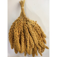 Yellow Millet Sprays